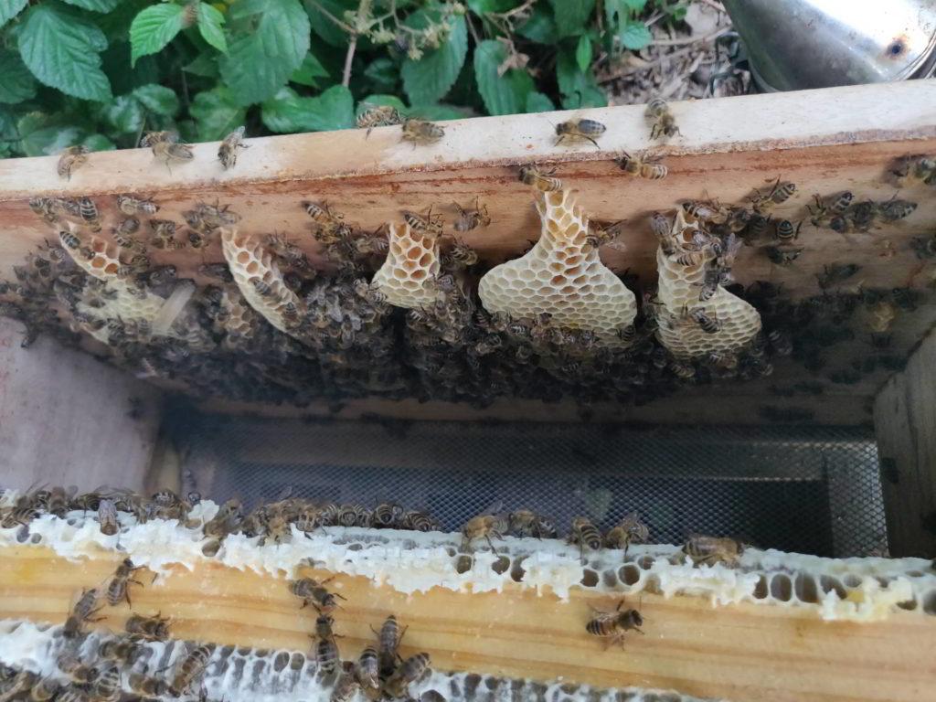 """Ein Blick in den Bienenstock zeigt 5 der 7 Magischen """"Produkte"""""""