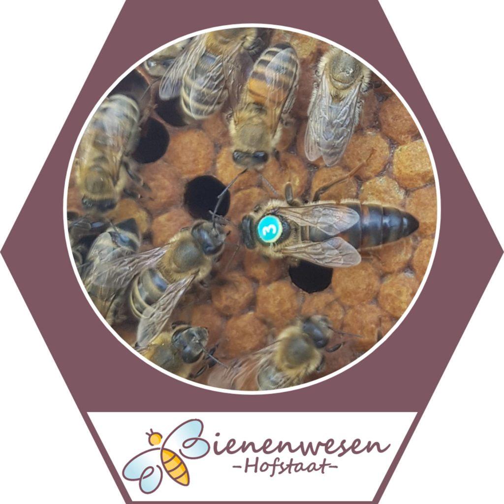hofstaat Bienenwesen