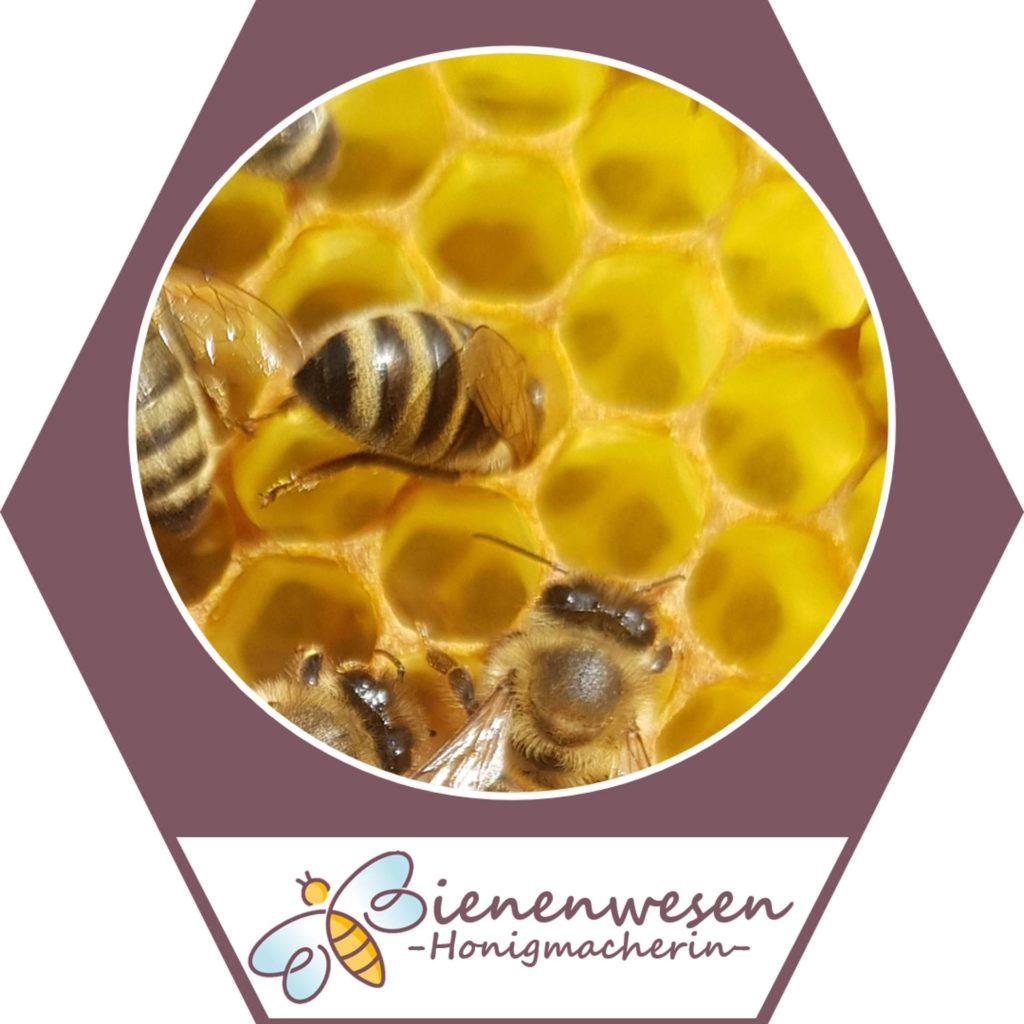 Honigmacherin Bienenwesen