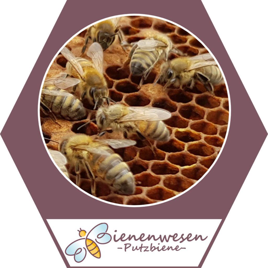 Raumpflegerin Bienenwesen
