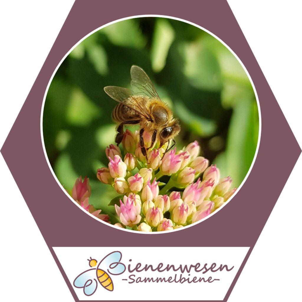 Sammlerin Bienenwesen