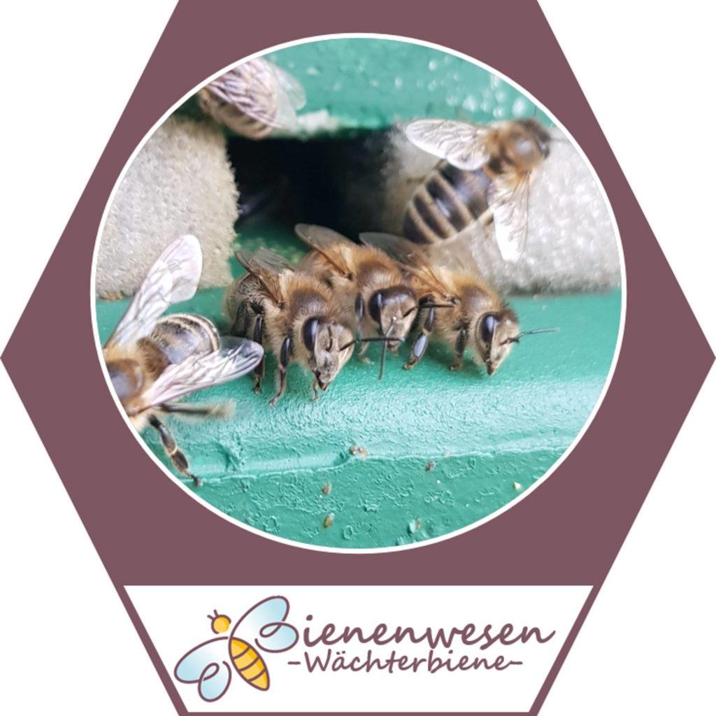 Wächterin Bienenwesen