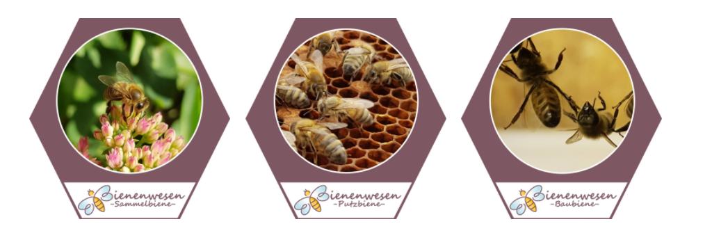 Bienenwesen_Banner